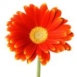 orange flower on stem