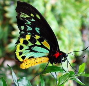 Butterfly Lakis Fourouklas